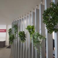 Plantability Indoor Plant Hire Lush Green Office  Hanging Plants Rockhampton