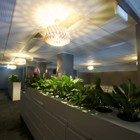 Plantability Indoor Plant Hire Lush Green Office Divider Rockhampton