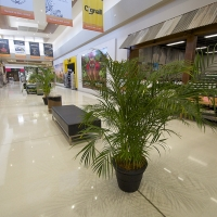 Plantability Indoor Plant Hire Top Interior Shopping Centre Parkhurst
