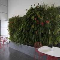 Plantability Indoor Plant Hire Green Wall Car Dealership Yeppoon