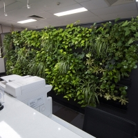 Plantability Indoor Plant Hire Green Wall