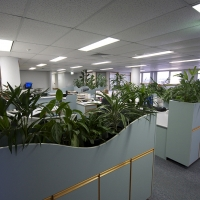 Plantability Indoor Plant Hire Top of Cubicle Lush Green Office Rockhampton
