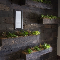 Plantability Indoor Plant Hire  Plant Wall in Gracemere Restaurant