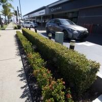 DSC_0062_2Plantability Landcaping Perfect Hedges
