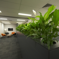 Plantability Indoor Plant Hire Lush Green Office Divider Rockhampton