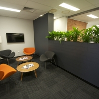 Plantability Indoor Plant Hire  Lush Green Office Rockhampton Seating Area
