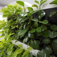 Plantability Indoor Plant Hire Top of Cubicle Lush Green Plant Installation