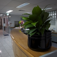 Plantability Indoor Plant Hire Reception Plants Rockhampton