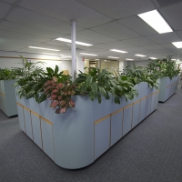 Plantability Indoor Plant Hire Top of Cubicle Lush Green Office