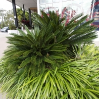Plantability Landscaping Lush Green Tropical